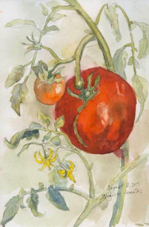 vigliotti_tomato